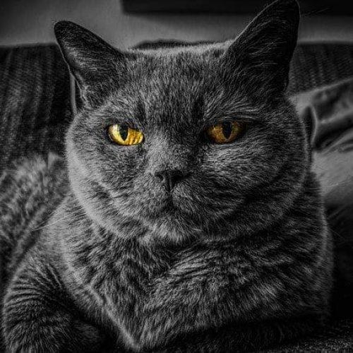 cat-2143332_640
