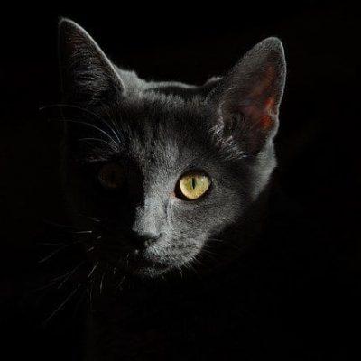 cat-778315_640